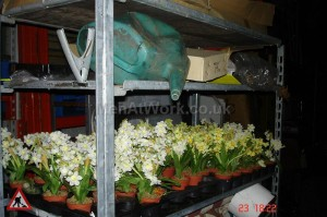 Fake Potted Primroses - Fake Potted Primroses