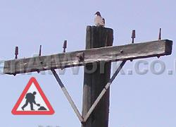 Telegraph Pole Reference - Telegraph Pole Reference (2)